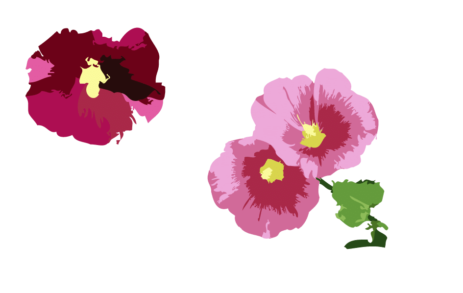 Rose trémière bas droite