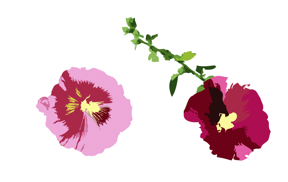 Rose trémière bas gauche