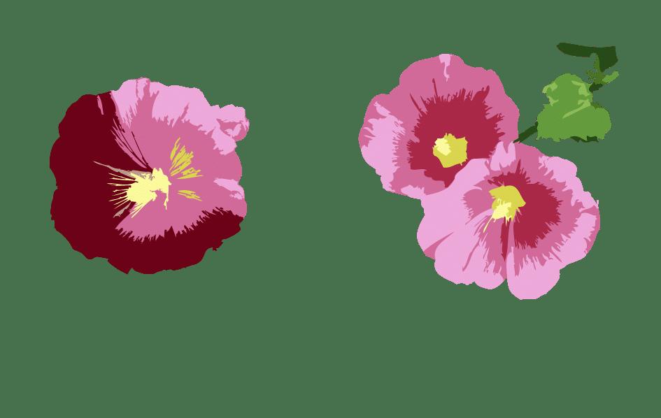 Rose trémière haut droite