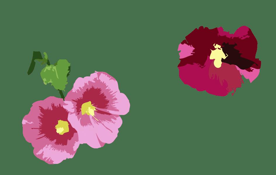 Rose trémière haut gauche